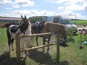chevaux à l'attache et camion garé