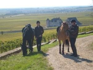 Semezanges-Clos Vougeot: les vignes en automne: la Côte d'Or mérite bien son nom